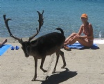 I do not know if this Croatian deer was only curious or horny? LOL